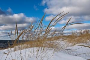 beach grass in snow