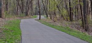 trail through woods-0393